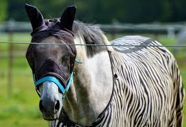 natural fly spray for horses reviews