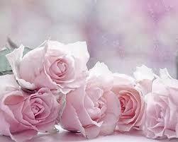 light pink rose flowers wallpaper. With Light Pink Rose Flowers Wallpaper