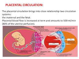 Placental Circulation