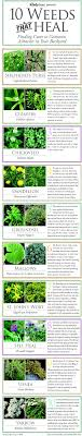 medicinal plants you can grow in your backyard check survival  medicinal plants you can grow in your backyard