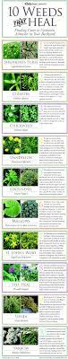 medicinal plants you can grow in your backyard check survival  medicinal plants you can grow in your backyard