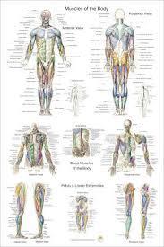 Human Skeletal Anatomy 24 X 36 Chiropractic Medical