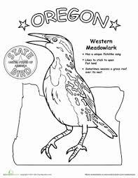 oregon state bird life science oregon state bird worksheet education com on states worksheets