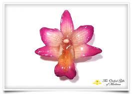 orchid dendrobium formosa pendant brooch purple