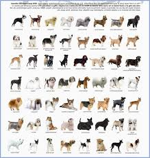 Small Dog Breeds Chart Inspirational Small Dog Breeds Chart