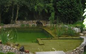 salt water pool with fish. 4) Clear Water Revival Pool Salt Water Pool With Fish -