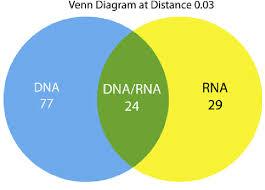 Venn Diagram Comparing Dna And Rna Venn Diagram Comparing The Rna And Dna Shared And Nonshared