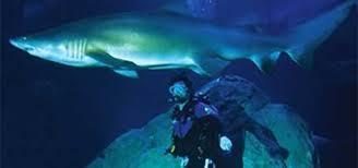 Swimming With Sharks at the Adventure Aquarium | TFH Magazine