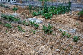 diy garden cloche gardening