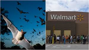 Walmart Alvin Tx Texas Walmart Subject To Bat Shit Invasion Involving Literal Bat Shit