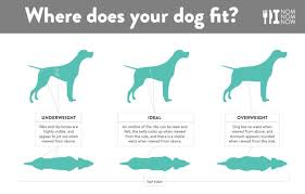Whats Your Dogs Ideal Weight