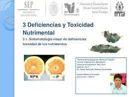 3 Deficiencias y Toxicidad nutrimental.