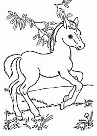 Cool Baby Horse Coloring Pages Coloring Paged For Children
