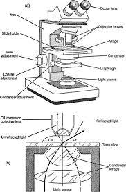 Types Of Microscopes Chart Types Of Microscopes