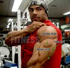 best triceps exercises for building