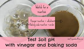 And of course, too much baking soda in your coffee can leave you with a less than tasty cup that leaves. Testing Your Soil Ph Without A Kit Preparednessmama