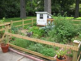 how to protect vegetable garden from animals without a fence