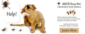 natural tick and flea treatment for dogs and cats