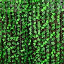 Climbing Vine Plants NZ  Buy New Climbing Vine Plants Online From Wall Climbing Plants Nz