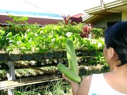 container garden vegetables. Indoor Container Gardening Outdoor Gardens Amazing Design Ideas Vegetables Nice Decoration Small Yard Garden