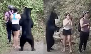 VIDEO: 3 Female Hikers <b>Keep Calm</b> as Curious <b>Black</b> Bear Sniffs ...