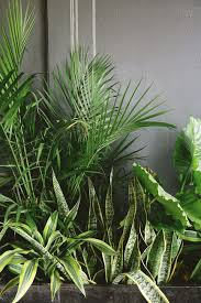 Image result for Indoor jungle