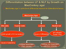 Imvic Chart Enterobacteriaceae Identification