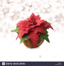 Weihnachtsstern Im Korb Handgefertigte Blume Stoff