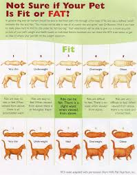 Explicit Corgi Puppy Weight Chart Weight Of Animals Chart