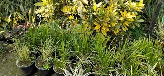 top roof gardening services in mysore best rooftop gardening services justdial