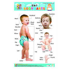 Body Parts Charts