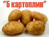 "Результат пошуку зображень за запитом ""акція 5 картоплин в школі"""