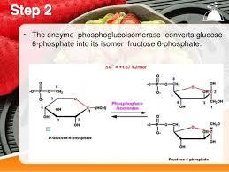 Glycolysis 10 Steps By Asar Khan
