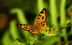 Free download Nature Animals Insects Hd ...