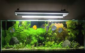 Licht Im Aquarium