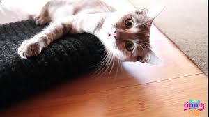 cat play rug interactive cat play rug interactive mat