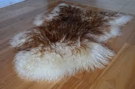 icelandic sheepskin rug brown white curly
