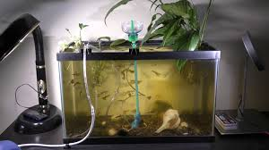 we can use this sponge filtering system in any aquarium this is an example of an installation in 10 gallons aquarium