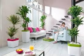 Indoor Plants Living Room Ideas