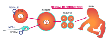 Modes Of Reproduction Asexual And Sexual Reproduction Byjus