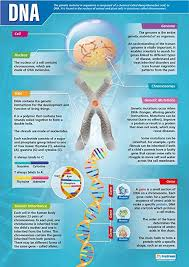 Dna Science Posters Gloss Paper Measuring 33 X 23 5 Stem Charts For The Classroom Education Charts By Daydream Education