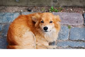 Coccidia in Dogs - Symptoms, Causes, Diagnosis, Treatment, Recovery ...