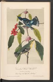 Cerulean Wood-Warbler Exotic Birds of North America Bird Wall Decor