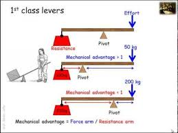Lever Systems In The Human Body Youtube