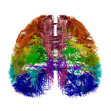 first wiring diagram of mouse brain created d brief a top down 3 d view of connections in the mouse brain using allen