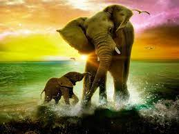 Beautiful Elephant Wallpapers - Top ...