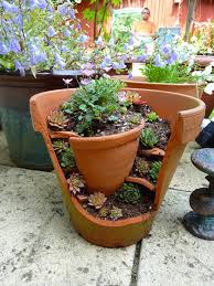 Small Picture container combo ideas from costa farms costa farms 8 stunning