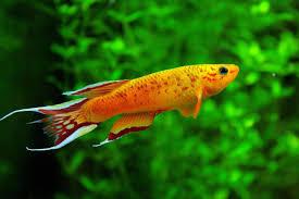Cool Aquariums Cool Freshwater Fish For Small Aquarium Aquarium Fish