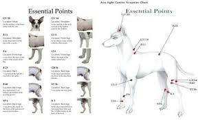 Canine Trigger Point Chart Canine Acupressure Charts Acupressure Points Chart