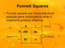 Chapter 8 Mendel Heredity Ppt Download